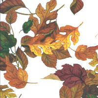 Fall Leaves Cello Roll 24 x 50