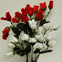 Mini Rose Bushes
