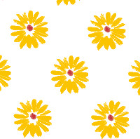 Yellow Daisies Cellophane Roll 24 x 100